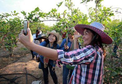 นักท่องเที่ยวชมสวนมัลเบอรี่ เปิดชุมชนท่องเที่ยว OTOP นวัตวิถี บ้านหนองบัว อำเภอปะคำ